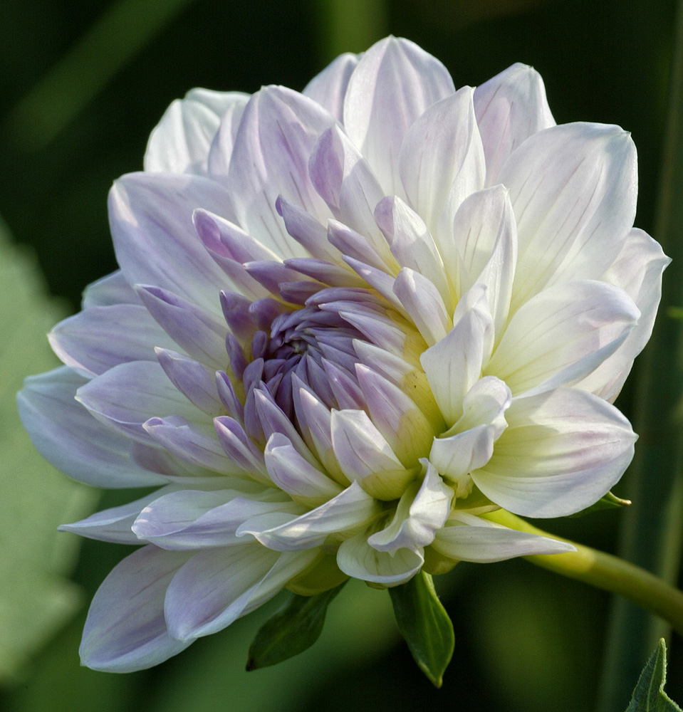 Flower found in Camden Maine