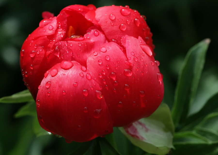 Flower after the rain.