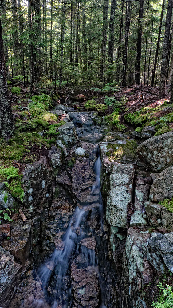 small forest stream in wide angle.